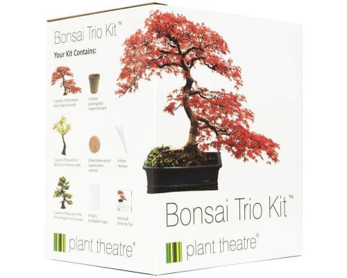 Un Kit Bonsaï Trio